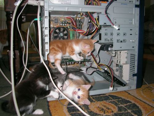 cats review server for magento site hacks