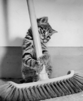 cat cleans up magento site hack like a boss